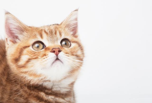 子猫のイメージ画像