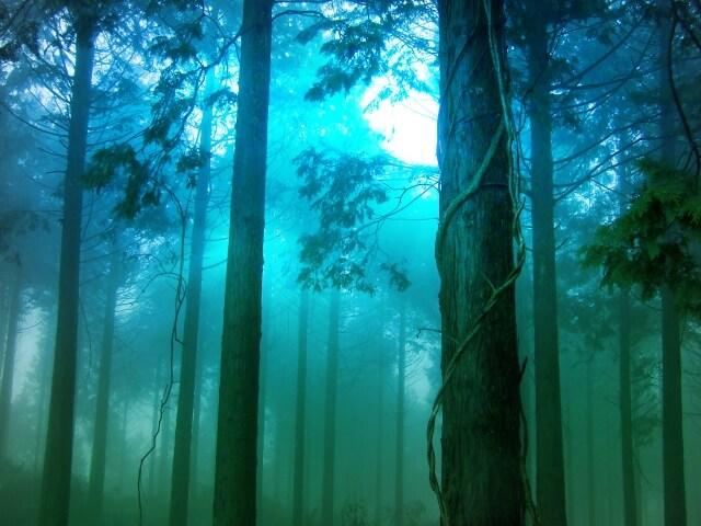 杉林のイメージ画像
