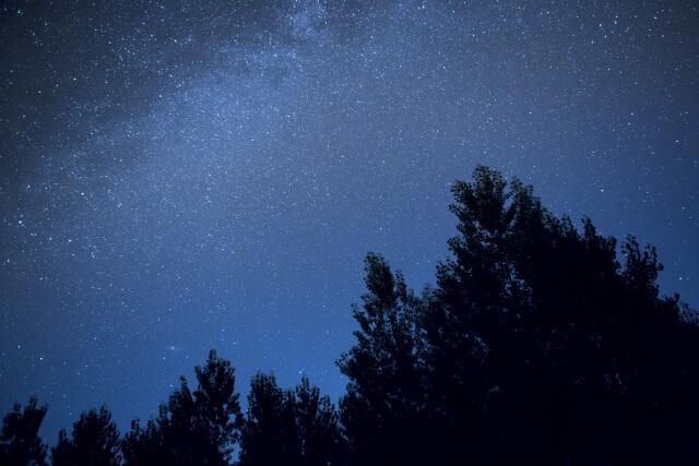 夜の森のイメージ画像